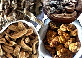 中国の市場にある新鮮で高品質な漢方原料素材