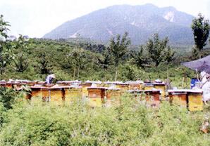 中国の漢方原料素材の畑・農場