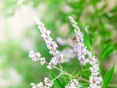 ミツバチの画像 シンギーには「加水分解ハチノコエキス」など、希少な化粧品原料がある